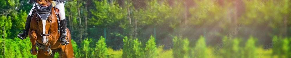 Fototapety, obrazy: Horizontal photo banner for website header design. Sorrel horse and rider in uniform during showjumping competition. Blur green trees and sun rays as background. Copy space for your text.