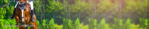Spoed Foto op Canvas Paarden Horizontal photo banner for website header design. Sorrel horse and rider in uniform during showjumping competition. Blur green trees and sun rays as background. Copy space for your text.