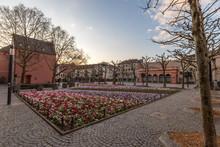 Blumenbeet Am Liebfrauenplatz In Mainz