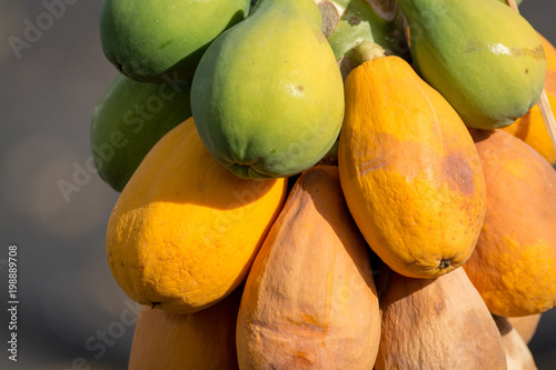 Deurstickers Canarische Eilanden Tropical papaya fruits hanging on papaya tree, exotic food