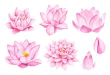 Beautiful Pink Lotus Flowers. Watercolor Illustration. Pure Water Blossom. Yoga, Zen Meditation Symbol. China And Japan Symbol.