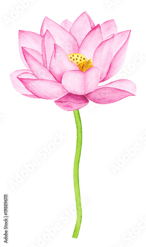 Beautiful Pink Lotus Flower Watercolor Illustration Pure Water