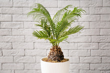 Tropical Plant With Green Leaves Near Brick Wall