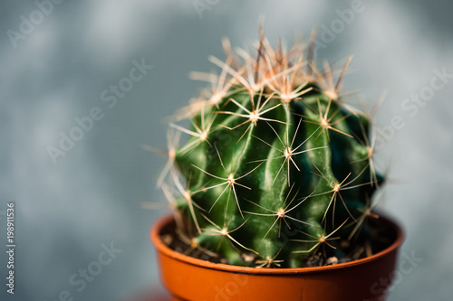 Tuinposter Cactus Small beautiful green cactus in brown pot close-up on background of abstract gray-blue.