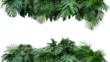 Tropical Leaves Foliage Plant ...