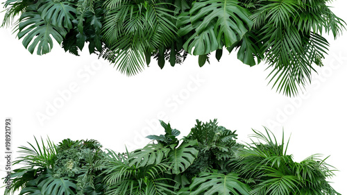 Cadres-photo bureau Vegetal Tropical leaves foliage plant bush floral arrangement nature backdrop isolated on white background, clipping path included.
