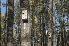 Birdhouses In Forest