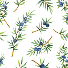 Watercolor Seamless Pattern Of Plants Juniper Isolated On White Background.