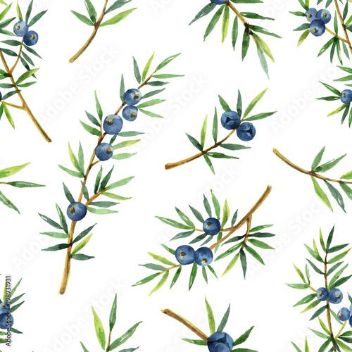 Fototapeta Watercolor seamless pattern of plants juniper isolated on white background. obraz