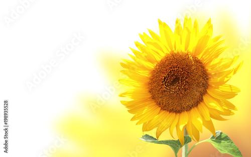 In de dag Zonnebloem Horizontal banner with sunflower