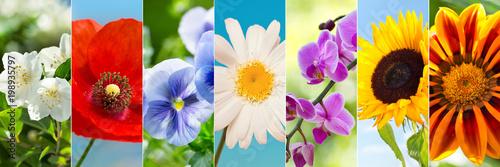 Papiers peints Pansies collage of summer flowers