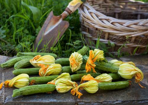 Frisch geerntete Zucchini mit Blüten werden in einen Korb gelegt