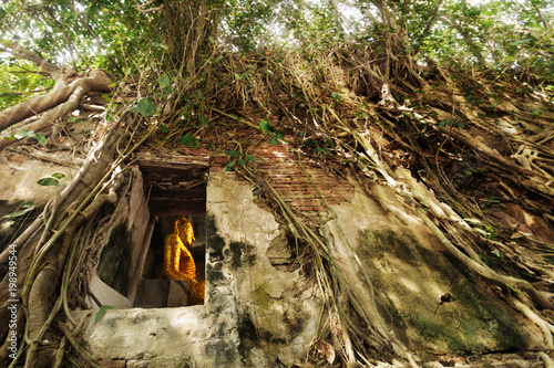 Fotografia, Obraz  statue of golden buddha situated in the old temple under root of Bodhi tree
