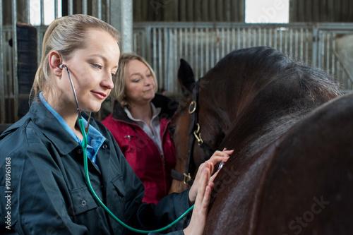 Fototapeta Female Vet Giving Medical Exam To Horse In Stable obraz