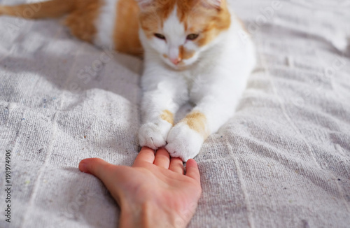 Cuadros en Lienzo Friendship between human and cat. Paws are on the hand.