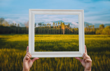 Hand Carry White Wooden Frame Focus On Green Rice Field, Tree And Mountain Colorful View In Countryside, Thailand