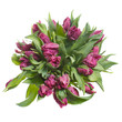 Large bouquet of lilac tulips isolated on white background.