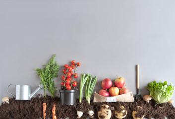 Organic fruit and vegetable garden