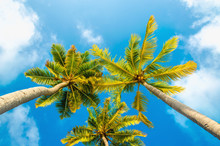 Exotic Tall Palm Trees Seen Fr...