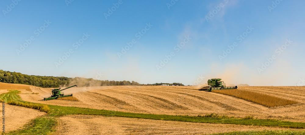 Fototapety, obrazy: Fall Harvest