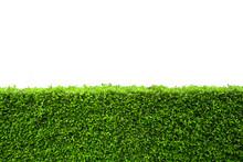 Isolated Green Hedge Bush On White Background