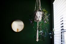 Hanging Plant Near Window