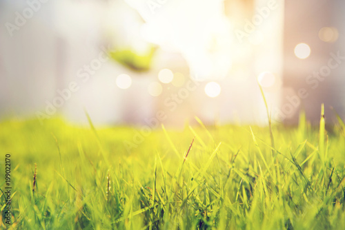 Fotografía  Close up fresh grass on spring or summer sunrise light background with copy space