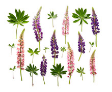 Wild Flowers Pink And Violet L...