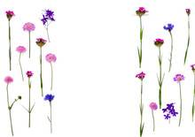 Blue And Pink Wildflowers: Cornflower, Consolida (larkspur), Field Scabious (Knautia Arvensis) And Wild Carthusian Pink On A White Background With Space For Text. Top View, Flat Lay