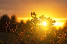 Sunset In The Garden Light Fil...