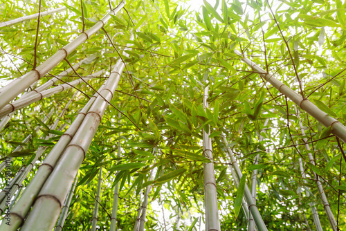 In de dag Bamboo Juicy young bamboo thickets