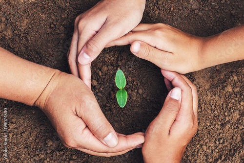 hand mater and child protection green seedling growing in soil. concept eco