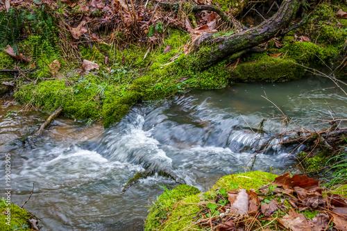 Rippling Brook Tapéta, Fotótapéta