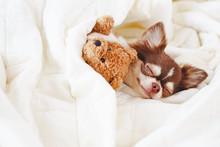 Cute Dog Sleeping