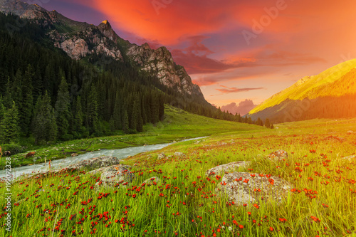 Blooming valley at sunset in the mountains