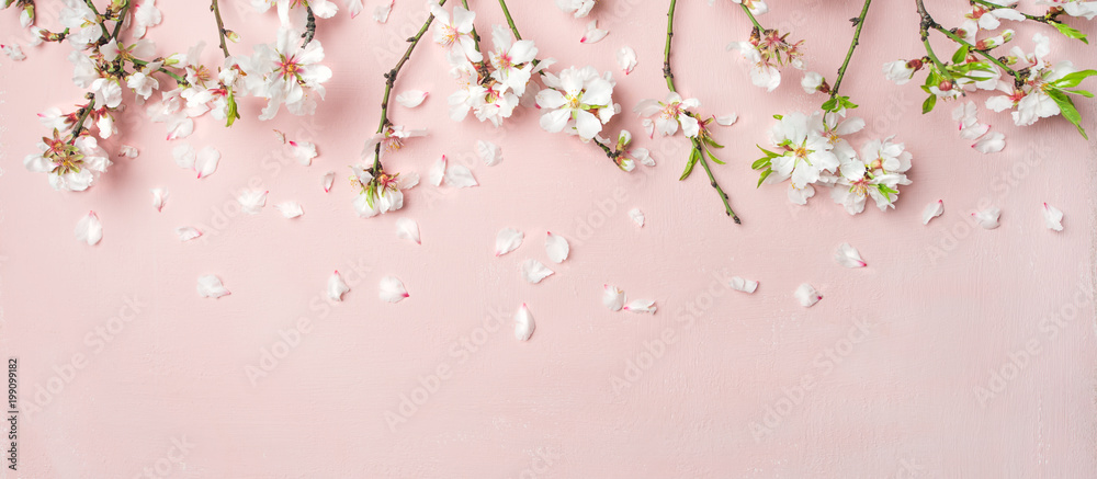 Fototapety, obrazy: Spring floral background, texture, wallpaper. Flat-lay of white almond blossom flowers and petals over pink background, top view, copy space, wide composition. Womens day holiday greeting card