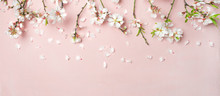 Spring Floral Background, Texture, Wallpaper. Flat-lay Of White Almond Blossom Flowers And Petals Over Pink Background, Top View, Copy Space, Wide Composition. Womens Day Holiday Greeting Card