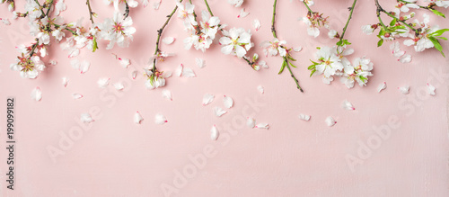 Fotobehang Bloemenwinkel Spring floral background, texture, wallpaper. Flat-lay of white almond blossom flowers and petals over pink background, top view, copy space, wide composition. Womens day holiday greeting card