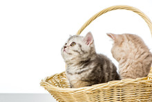 Adorable Little Kittens Sittin...