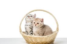 Cute Fluffy Kittens Sitting In...