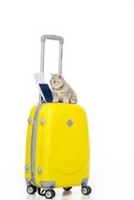 Kitten With Passport And Ticket On Yellow Suitcase Isolated On White