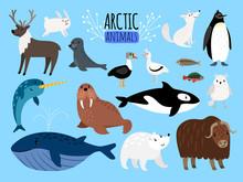 Arctic Animals. Cute Animal Set Of Arctic Or Alaska Vector Illustration For Education, Penguin And Polar Bear