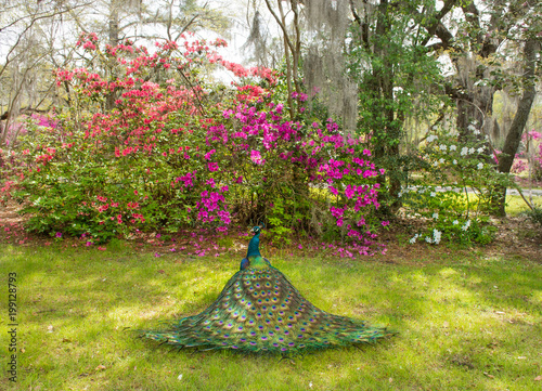Beautiful bird in blooming garden. Magnolia Plantation and Gardens ...