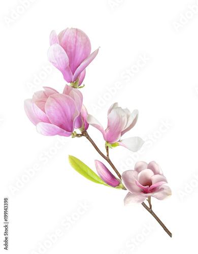 Deurstickers Magnolia magnolia branch