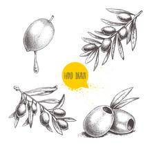 Sketch Hand Drawn Olives Set. ...