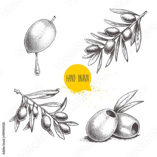 Sketch hand drawn olives set Wallpaper Mural