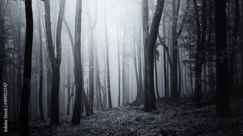 Fotografie, Obraz  dark halloween woods background