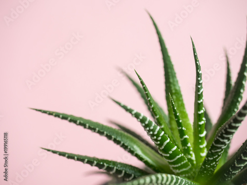Papiers peints Cactus Green Cactus on fashionable vanilla pink colored background