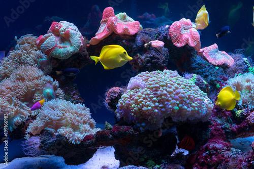 Plakat Jasne ryby pływają w akwarium