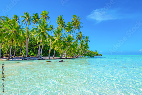 Fotomural Palm trees on the beach